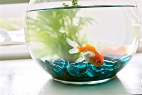 http://www.marcabeta.com/wp-content/uploads/2014/05/small-freshwater-aquarium-fish.jpg